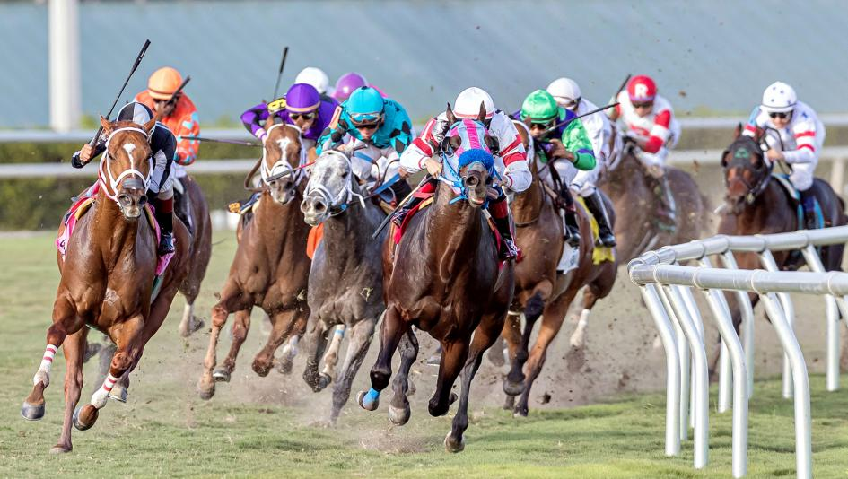 Daily Horse Racing Lineup: Racetracks to Watch and Bet Today | America's  Best Racing