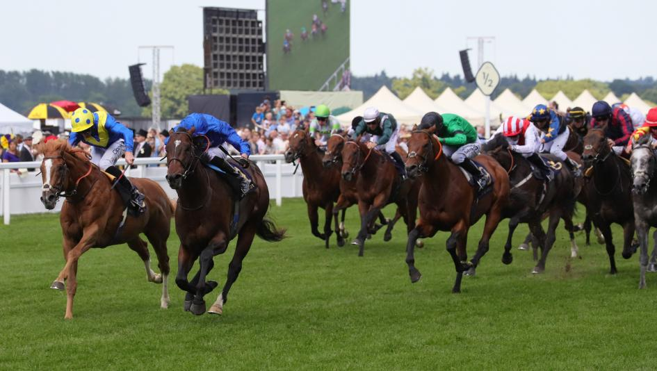 qipco sussex stakes betting calculator