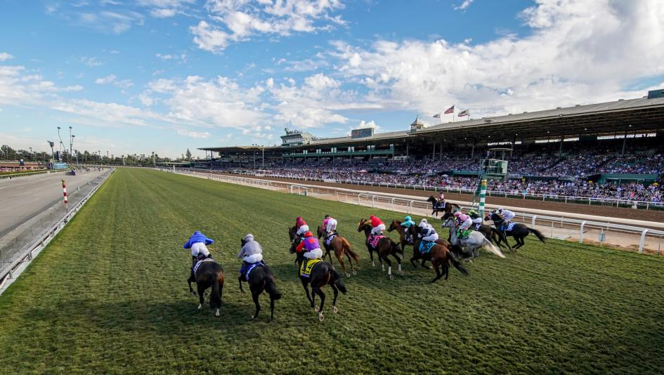 Brad Anderson Wins Breeders Cup Betting Challenge