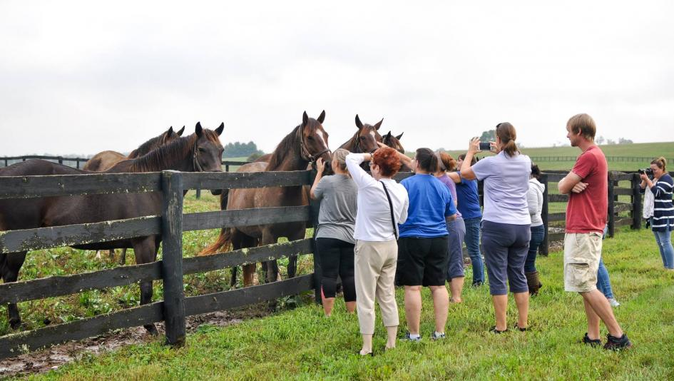 Visitors meet and greet horses at Claiborne Farm during a tour.