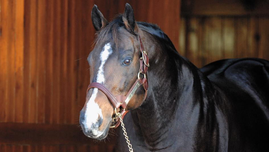 Champion racehorse and top sire A.P. Indy at Lane's End Farm in 2006.