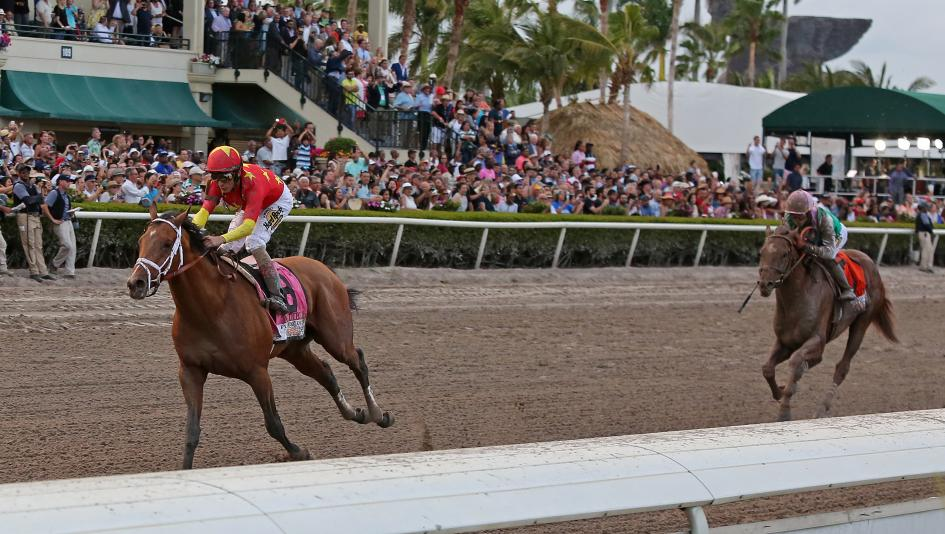 Audible to Tune Up for Pegasus in Harlan's Holiday Stakes on Saturday