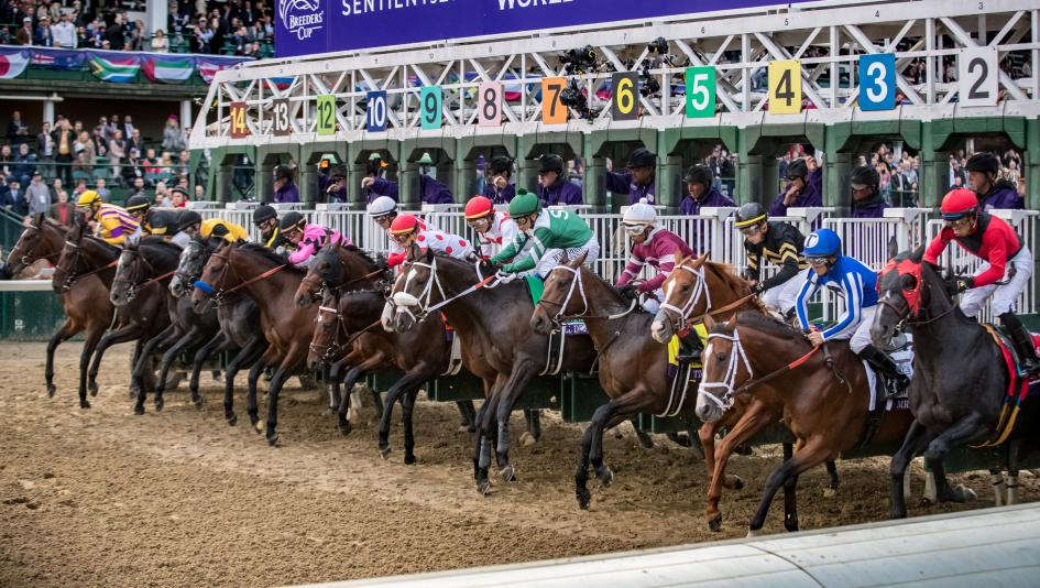 Horses break from the gate at the start of the 2018 Breeders' Cup Juvenile.