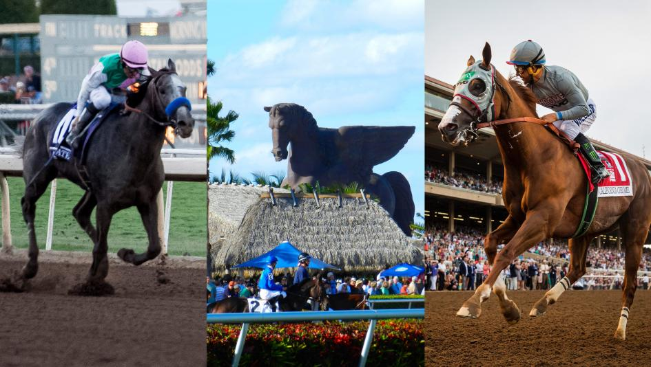Beginner's Guide to the Pegasus World Cup