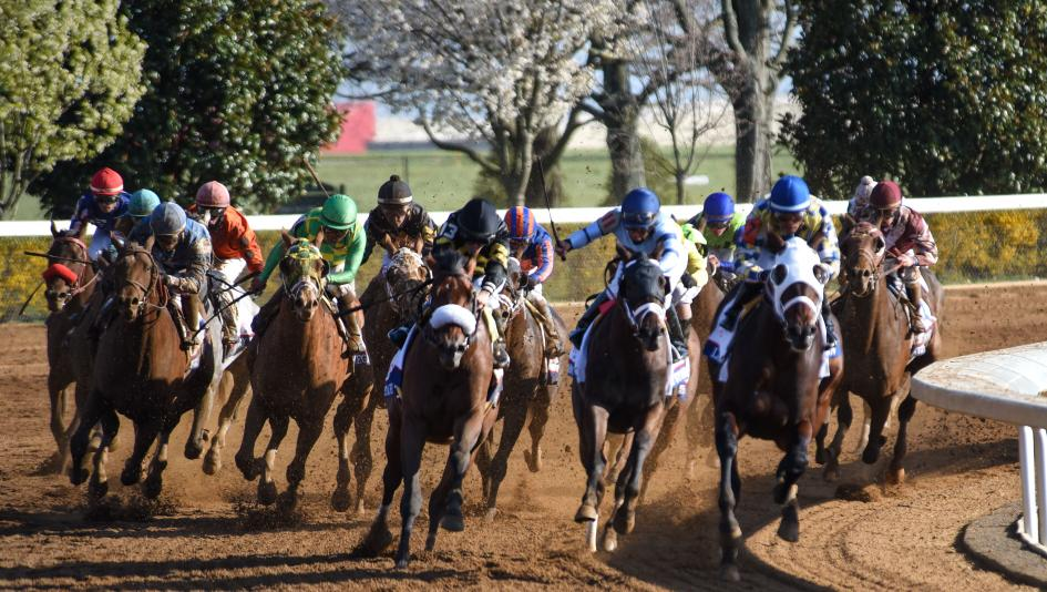 Horses round the turn for home in the 2016 Blue Grass Stakes. This year's race is Saturday.