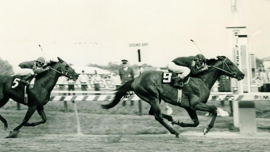 Venezuelan import Canonero, nicknamed the Caracas Cannonball, wins the 1971 Preakness Stakes.