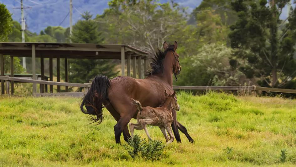 Cute Foals of the Week for March 24