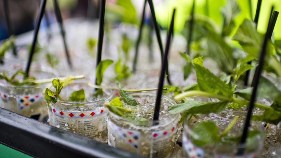 Mint juleps are but one culinary attraction of the Kentucky Derby.