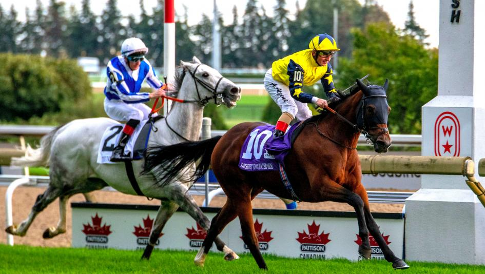 Desert Encounter will look for a repeat victory in Saturday's Pattison Canadian International.