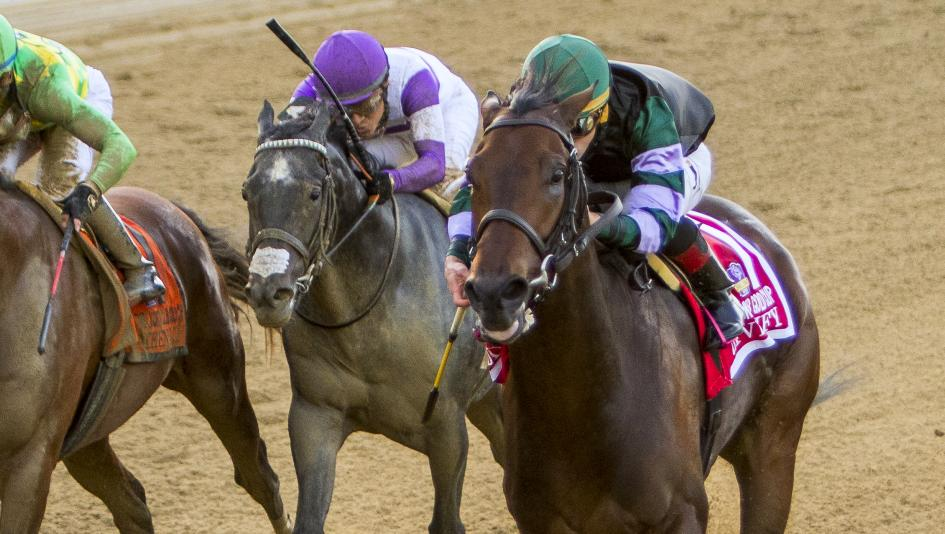 Diversify will seek a second consecutive Jockey Club Gold Cup win this weekend.