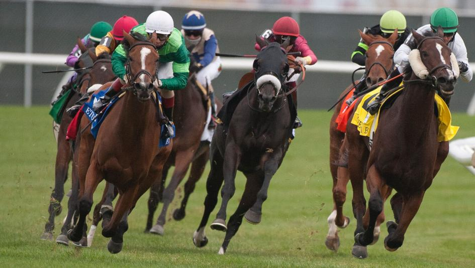 Woodbine horse racing betting odds in early do british bookies take bets on muellers future