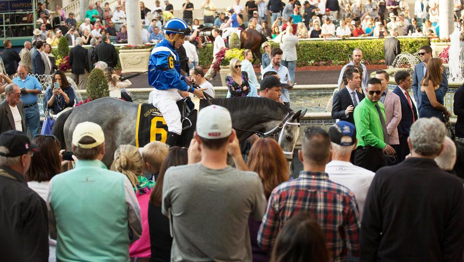 Mohaymen in the paddock before winning the 2016 Fountain of Youth.