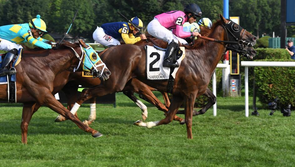 dead-heat horse racing betting