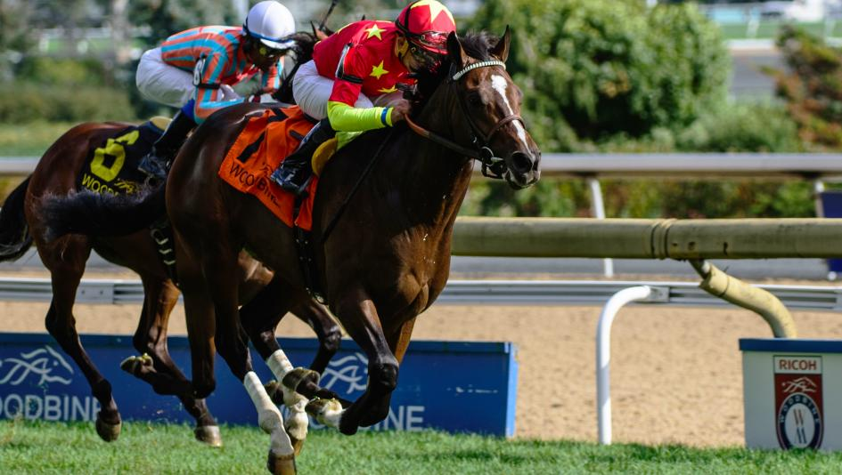 Good Samaritan won the 2016 Summer Stakes at the same course and distance as the Woodbine Mile.