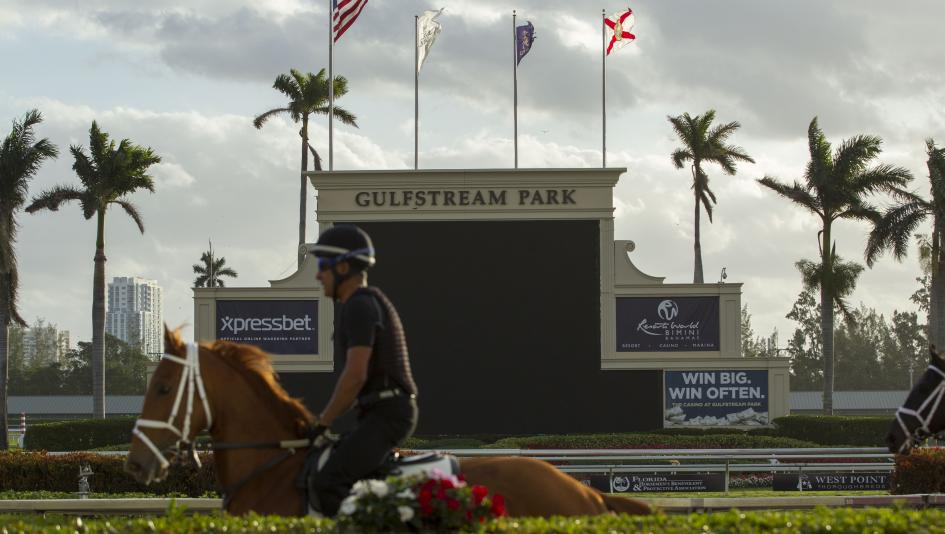 Horses train at Gulfstream Park, host of the 2019 Pegasus World Cup on Saturday.