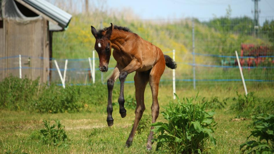 cute foals of the week returns first babies of 2018 america s