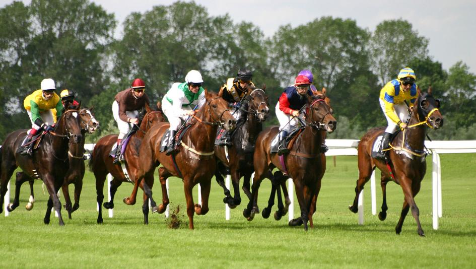 horse race betting for beginners