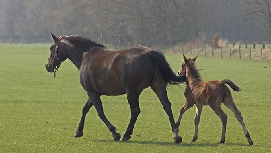 Cute Foals of the Week for Jan. 15