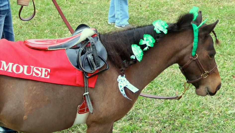 Twenty-Three Horses In Costumes to Celebrate National Dress Up Your Pet Day