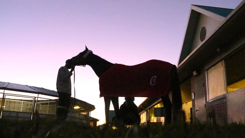 Slideshow: A Woodbine Morning With Tepin
