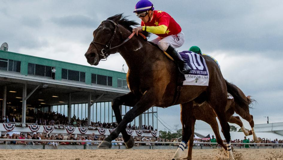 Image result for QUIP Owner - WinStar Farm LLC