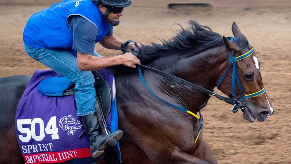 Last year's Breeders' Cup Sprint runner-up Imperial Hint enters this year's Sprint on a three-race winning streak.