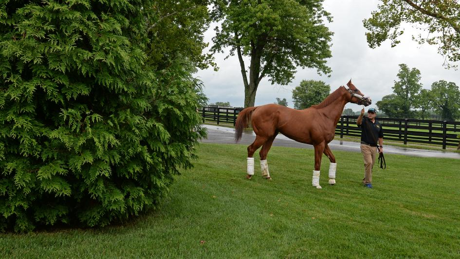Justify Arrives at WinStar, Horse Country Tours to Begin Soon
