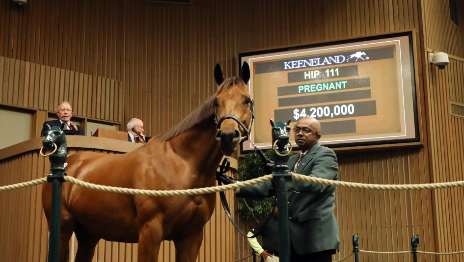 Lady Eli began the next chapter in her life last week, selling in foal to War Front for $4.2 million.