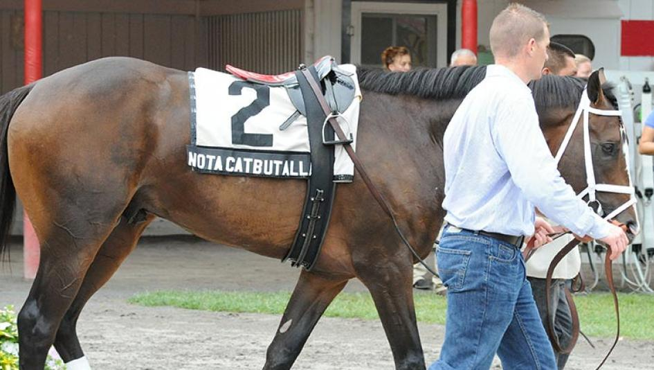 eleven funny horse names america s best racing