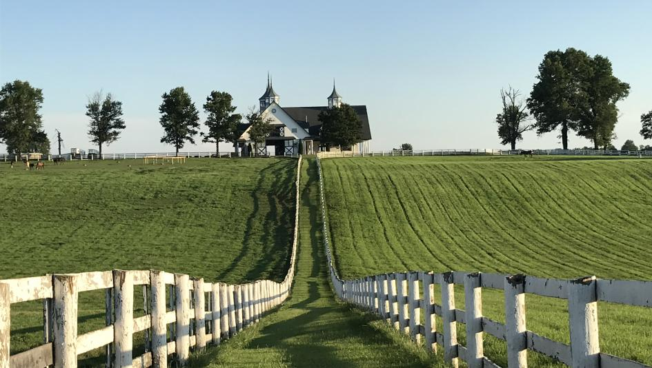 A Thoroughbred farm near Lexington, where a short course on the industry will be given starting this month.