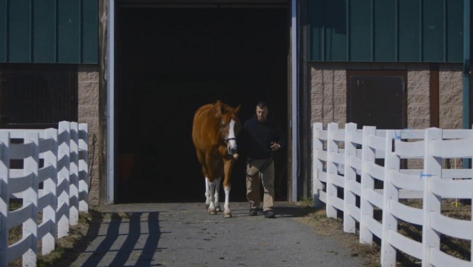 The Man O' War Project utilizes retired racehorses to treat U.S. veterans with PTSD.