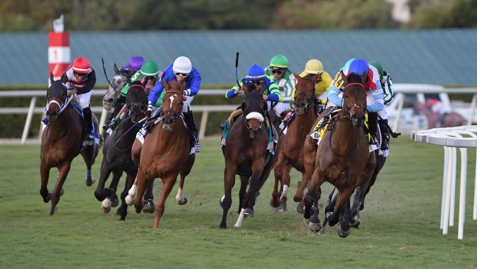 Santa ana park racing race program betting on sports las vegas sports betting online