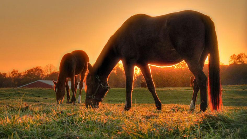 Cute Foals of the Week for Feb. 17