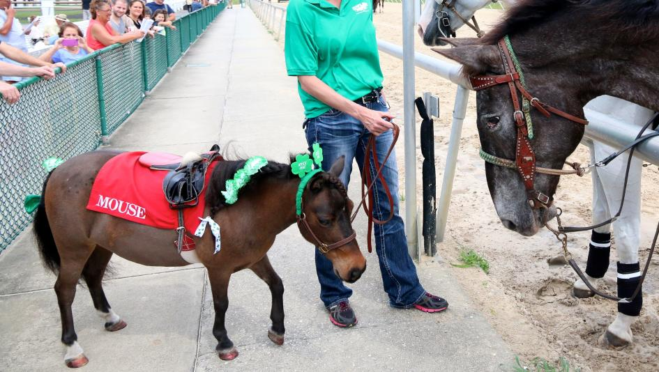 top st patrick s day horse names america s best racing