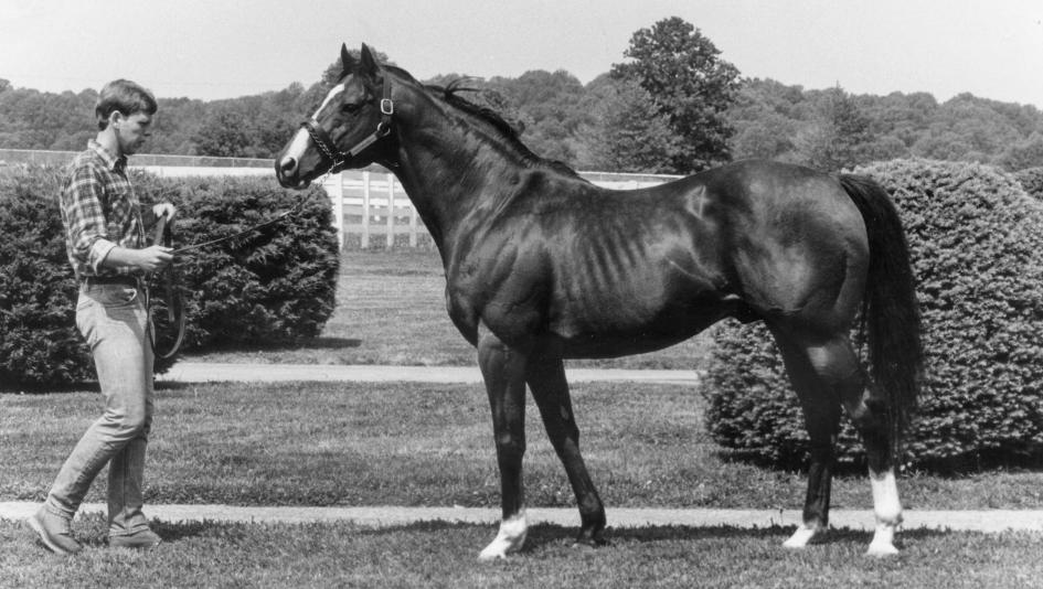 Northern Dancer at age 22 in 1983.