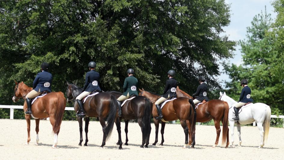Training a retired racehorse can bring its own challenges, but it is always rewarding.
