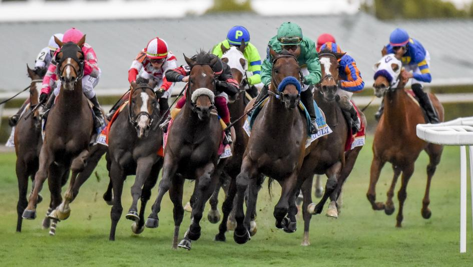 The field rounds the turn for home in the 2019 Pegasus World Cup Turf, with eventual winner Bricks and Mortar making his move second from left.