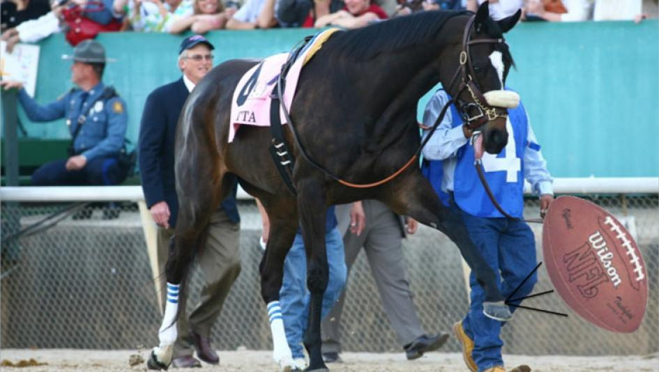 Your Pigskins and Ponies Picks for Dec  12-13   America's Best Racing