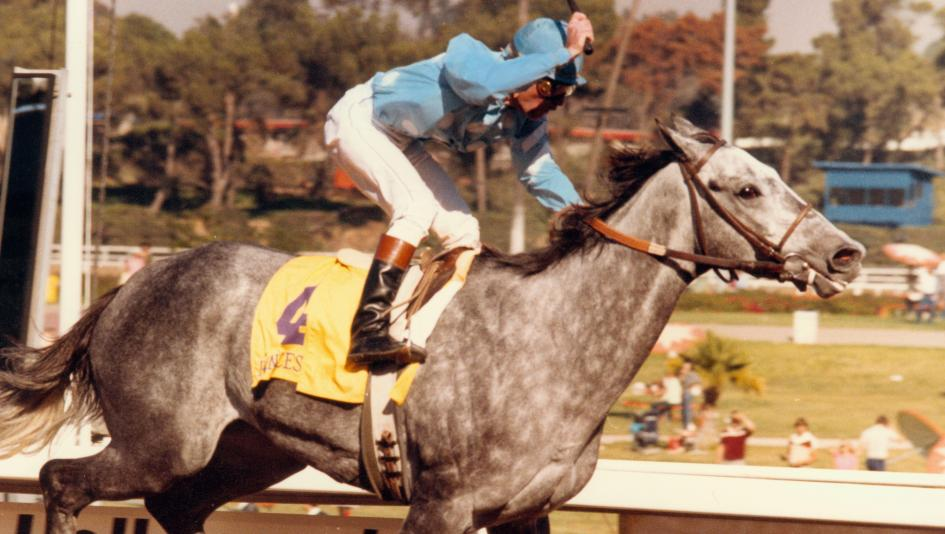Princess Rooney capped her career with a win in the inaugural Breeders' Cup Distaff.