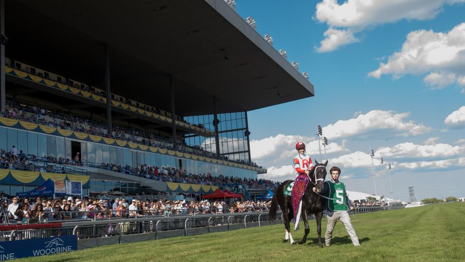 Sir Dudley Digges after winning the 2016 Queen's Plate, the first leg of the Canadian Triple Crown.