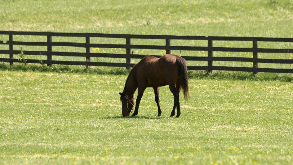 Thoroughbred Aftercare Alliance Grants $3.42 Million to Help Retired Racehorses