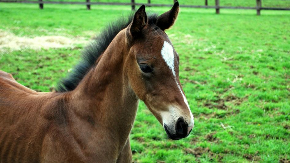 Cute Foals of the Week for Feb. 18