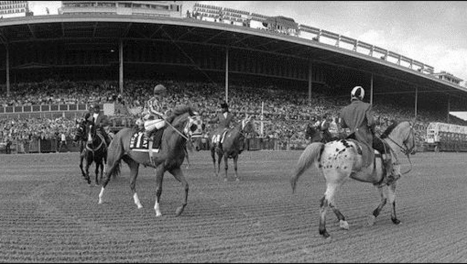 Secretariat prior to his win in the Arlington Invitational Stakes.