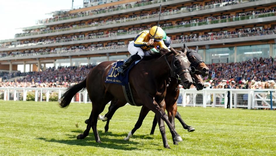 Wesley Ward's Shang Shang Shang Wins at Royal Ascot, Earns Breeders' Cup Berth