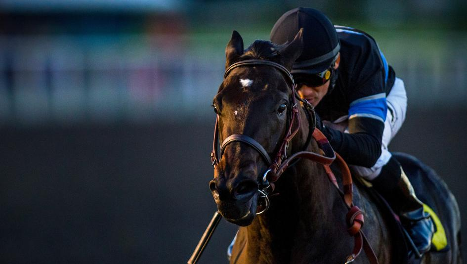 Champion Shared Belief had a brilliant career cut short by colic.
