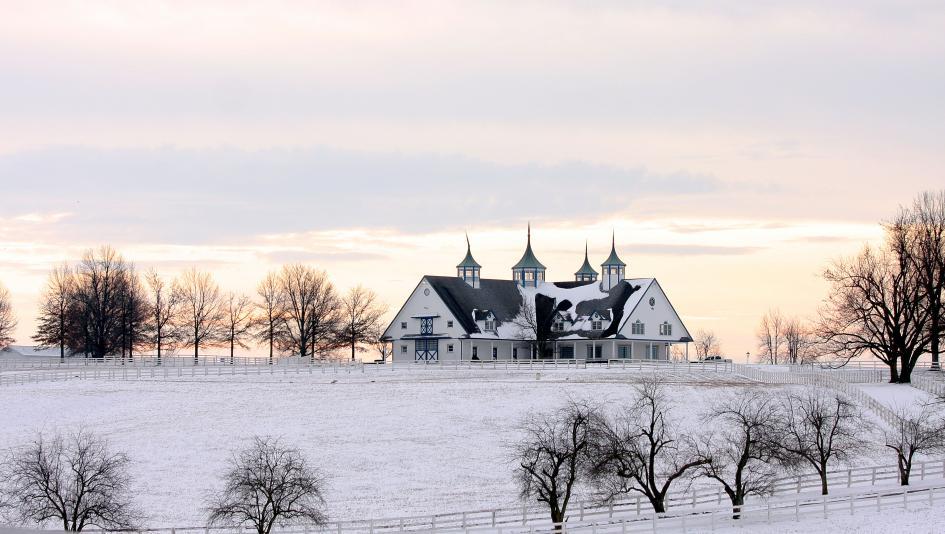 Scenes from a Snowy Day in Kentucky