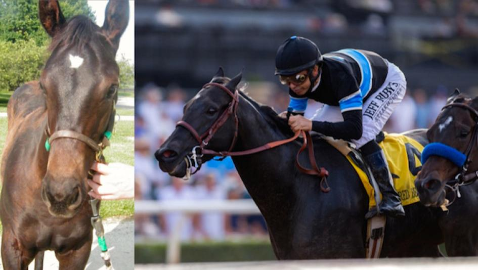 Breeders Cup Classic Contenders Then And Now America S