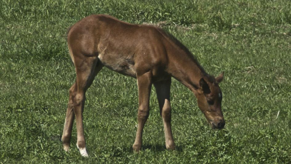 Cute Foals of the Week for May 14