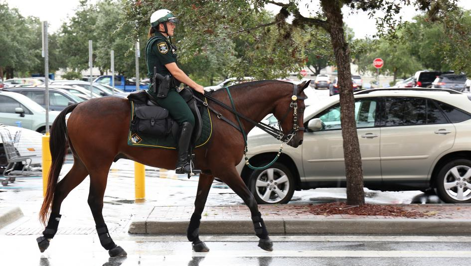 sheriff horse betting