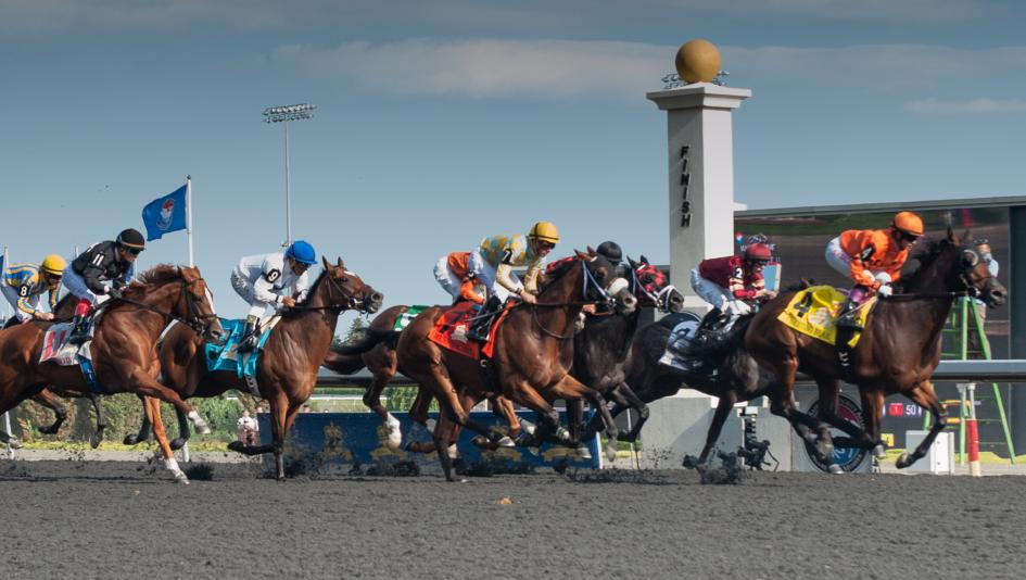 Racing on Woodbine's all-weather surface.